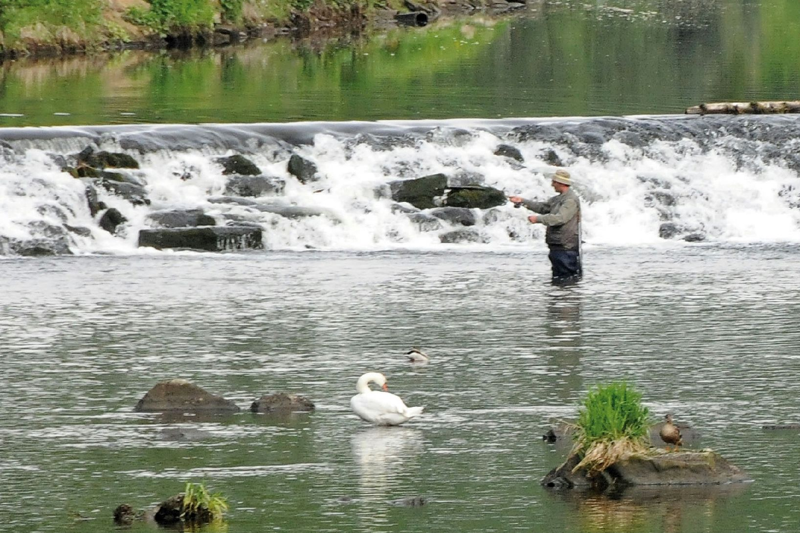 Man fishing in the Thaya river